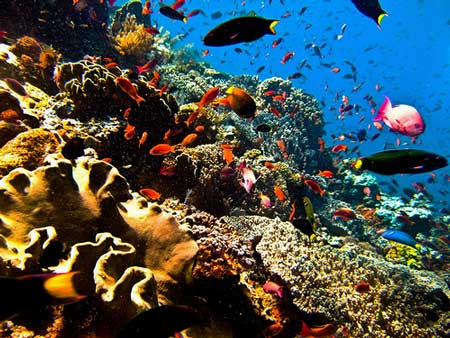 Coral reef and fishes at diving Bunaken, Sulawesi, Indonesia