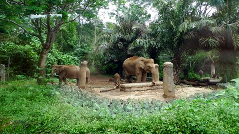 Elephants at Taman Safari, Bogor