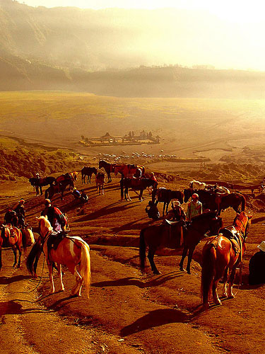 Horses and The Poten @ Mount Bromo, Indonesia