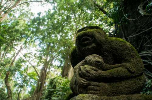 Monkey Forest, Ubud, Bali attractions