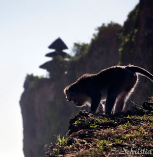 Monkey at Uluwatu Temple, Bali Indonesia