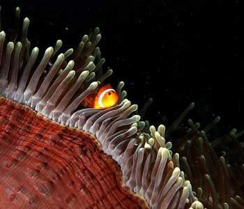 Night Diving, Wakatobi, Sulawesi Indonesia