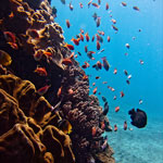 Top 10 Best Diving Sites in Indonesia