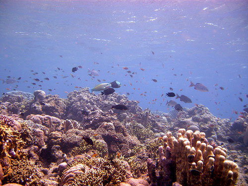Reefs and fishes in diving at Bunaken Island in Indonesia