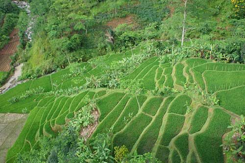 Rice Terraces at Bandung, Indonesia