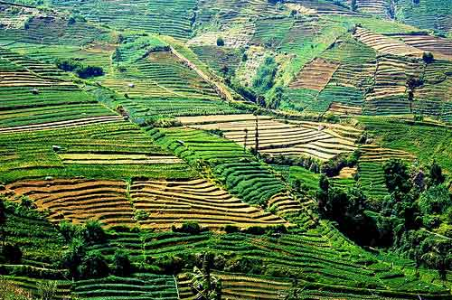 Rolling hills of plantations, Dieng Plateau, Java, Indonesia