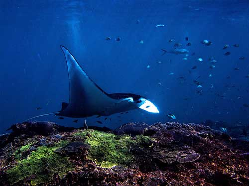 Snorkel and Diving at Bali, Indonesia, Indonesia