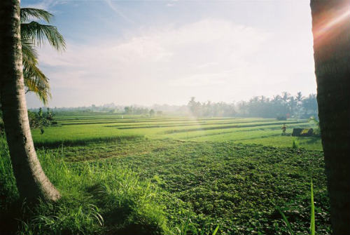 Trekking through rice fields, Bali